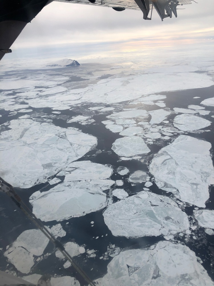Circular Ice Sheets floating in the Ross Sea