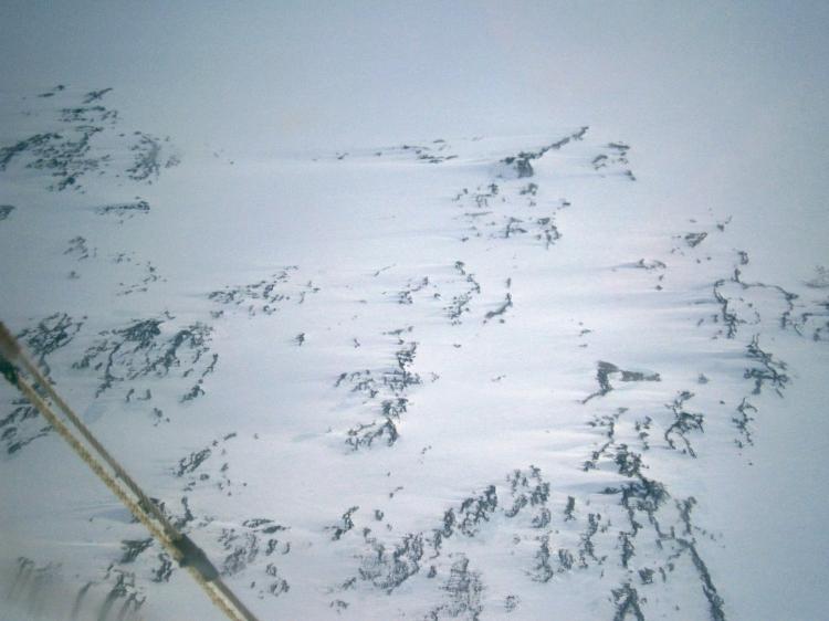 Wind blown Antarctic tundra